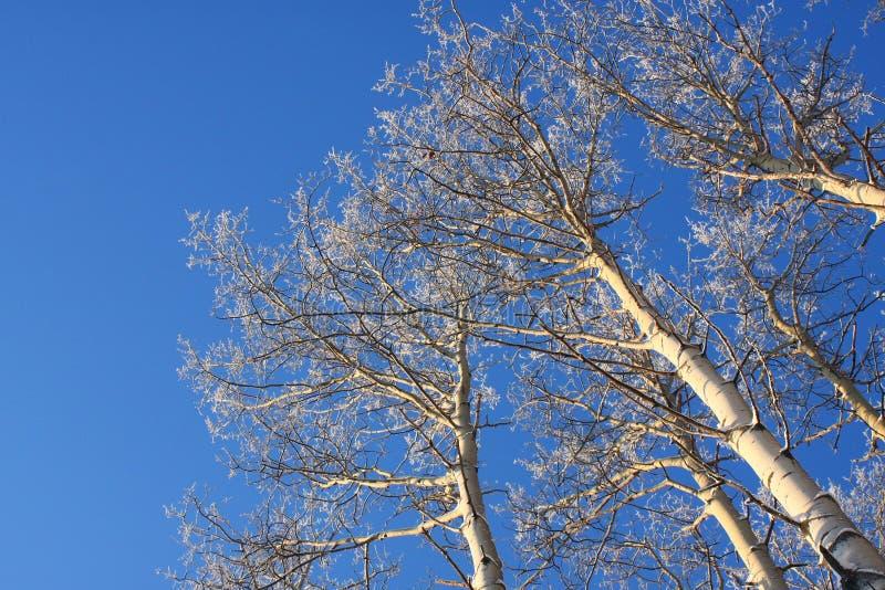 Árboles escarchados en luz de la última hora de la tarde imágenes de archivo libres de regalías
