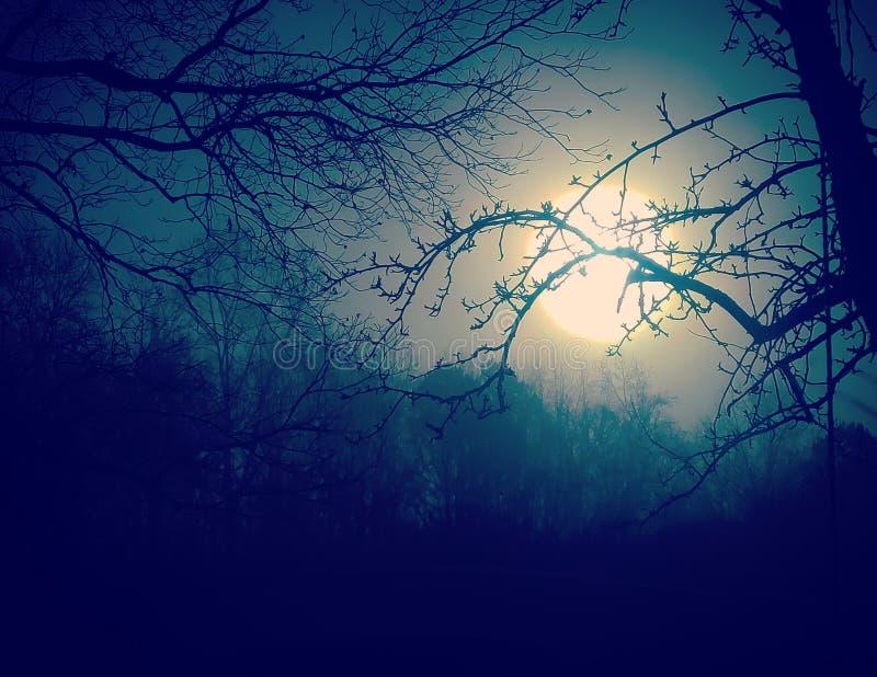 Árboles espeluznantes en claro de luna foto de archivo