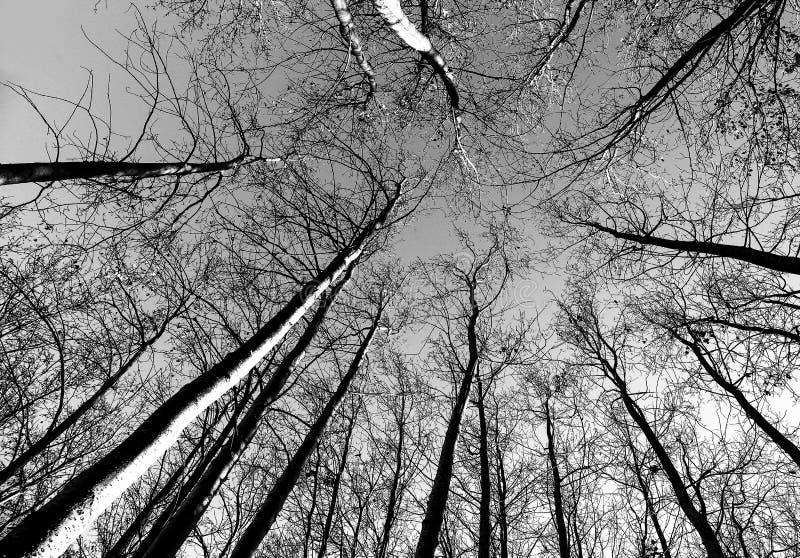 Árboles esqueléticos foto de archivo libre de regalías
