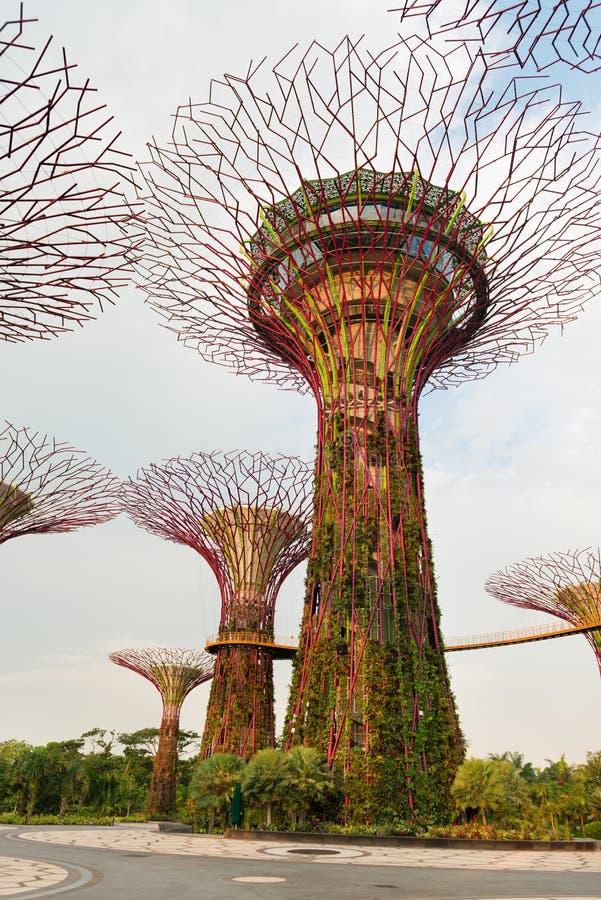 Árboles estupendos en jardines por la bahía Singapur fotos de archivo