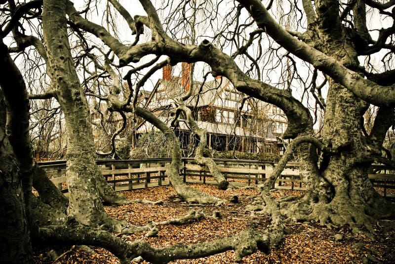 Árboles fantasmagóricos fotografía de archivo