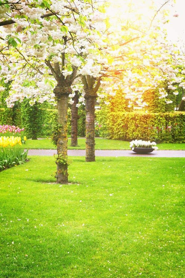 Árboles florecientes del resorte imagenes de archivo