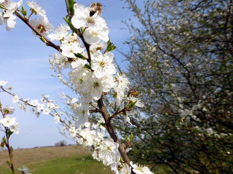 Árboles florecientes en el jardín fotografía de archivo