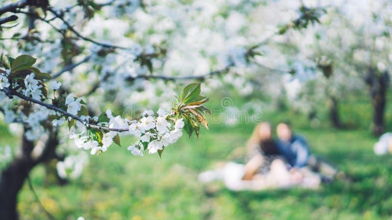 Árboles florecientes hermosos blancos con las flores florecientes fotografía de archivo