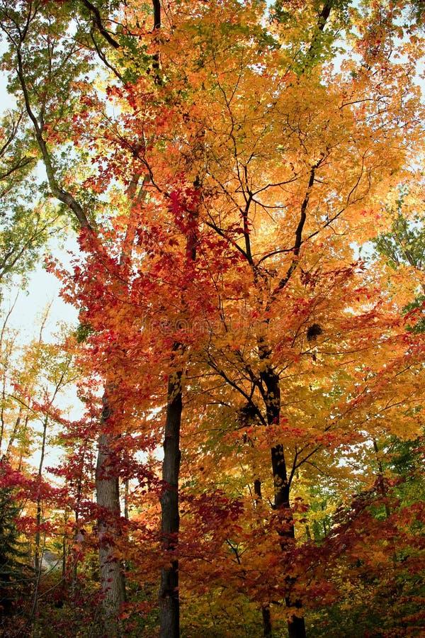 Árboles forestales de la caída fotos de archivo libres de regalías