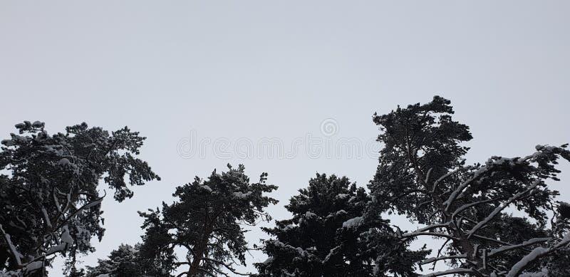 Árboles forestales del invierno en el bosque en invierno foto de archivo libre de regalías