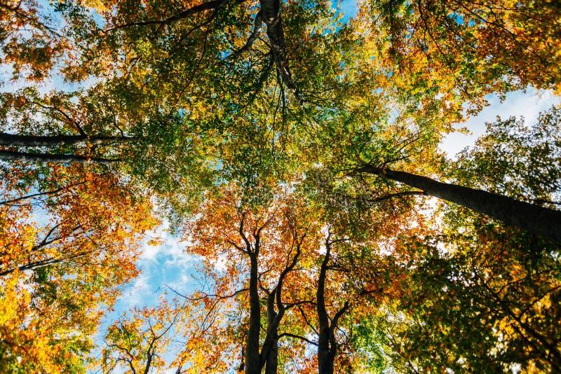 Árboles forestales del otoño imagenes de archivo