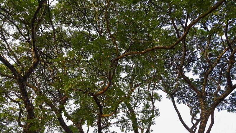 Árboles forestales del otoño Fondos de madera verdes de la luz del sol de la naturaleza fotos de archivo