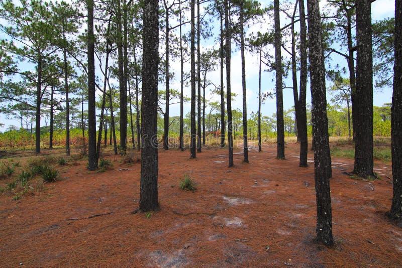 Árboles forestales del otoño Fondos de madera verdes de la luz del sol de la naturaleza fotografía de archivo libre de regalías