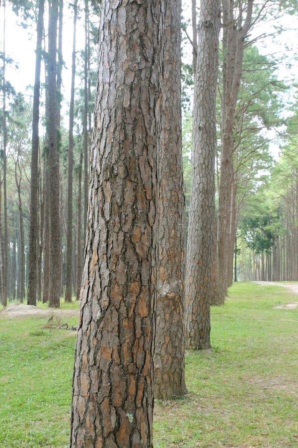 Árboles forestales del otoño Fondos de madera verdes de la luz del sol de la naturaleza foto de archivo