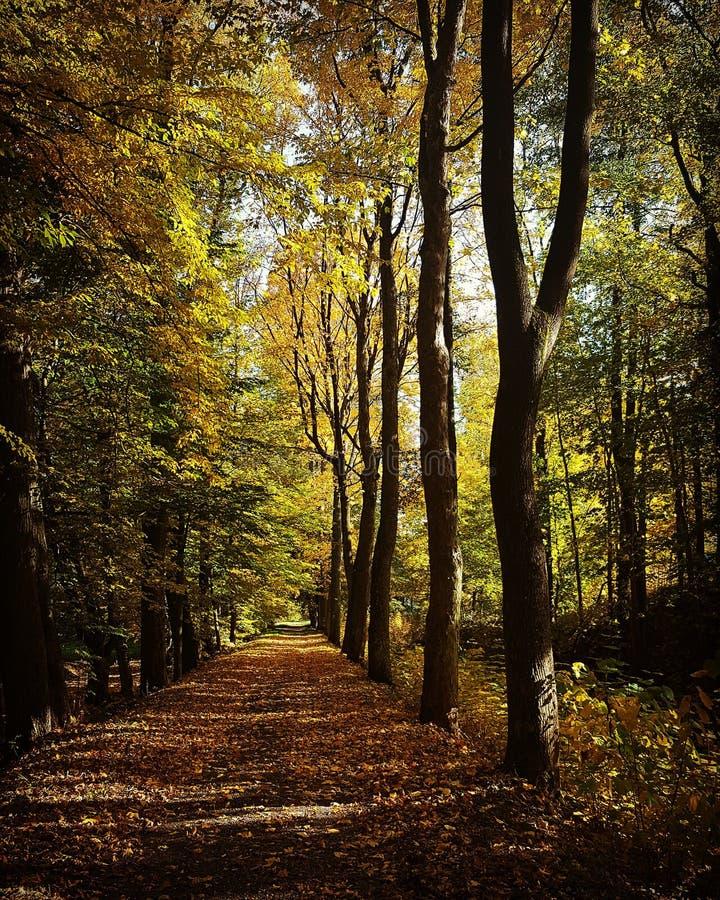 Árboles forestales del otoño Fondos de madera verdes de la luz del sol de la naturaleza Belleza del bosque fotos de archivo libres de regalías