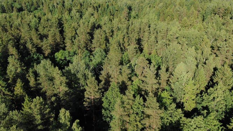 Árboles forestales densos verdes pintorescos encendidos por la sol brillante foto de archivo libre de regalías
