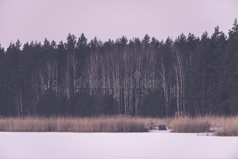 árboles forestales desnudos congelados en paisaje nevoso - EFF retro del vintage foto de archivo libre de regalías