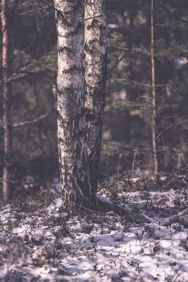 árboles forestales desnudos congelados en paisaje nevoso - EFF retro del vintage imagen de archivo libre de regalías