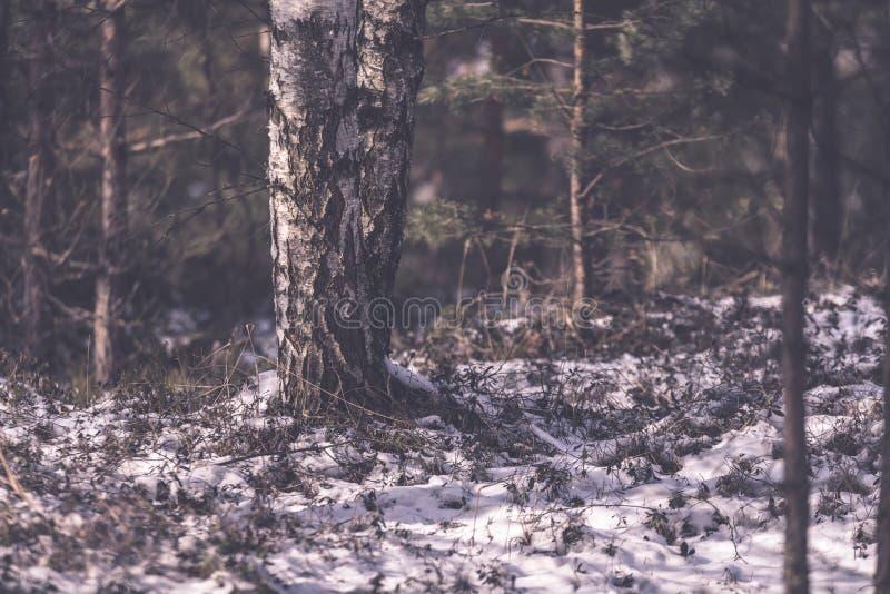 árboles forestales desnudos congelados en paisaje nevoso - EFF retro del vintage fotos de archivo libres de regalías