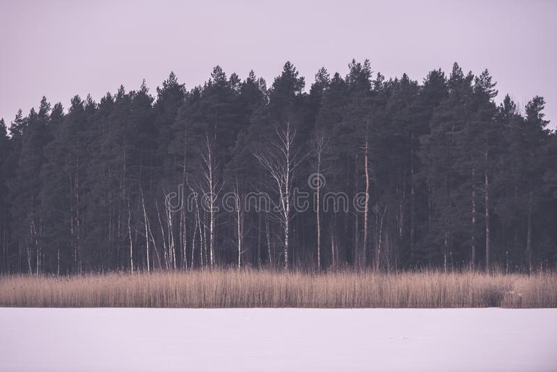 árboles forestales desnudos congelados en paisaje nevoso - EFF retro del vintage fotografía de archivo libre de regalías