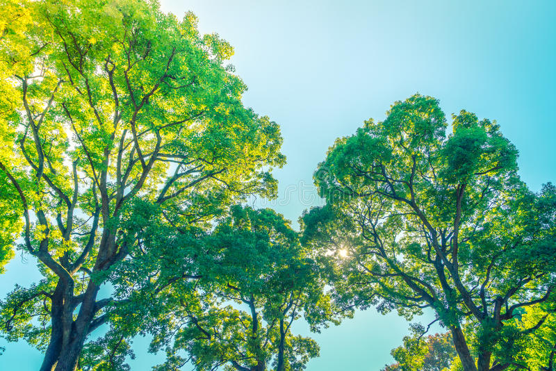 Árboles forestales (efecto procesado imagen filtrado del vintage ) fotografía de archivo libre de regalías
