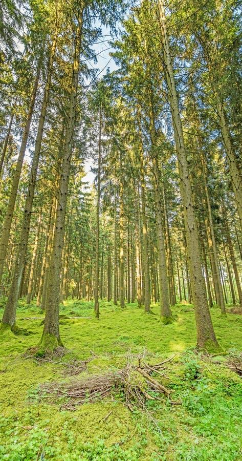 Árboles forestales en naturaleza verde imágenes de archivo libres de regalías
