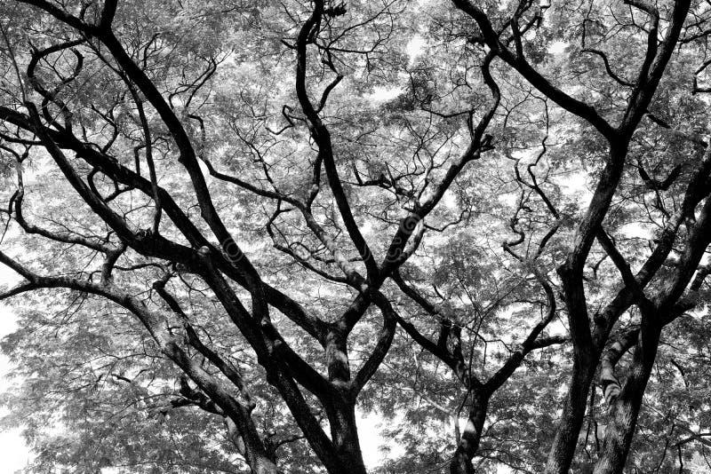 Árboles forestales fondos de madera blancos y negros de la naturaleza fotos de archivo