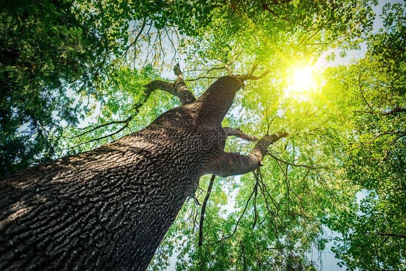 Árboles forestales fondos de madera de la luz del sol de la naturaleza fotos de archivo libres de regalías