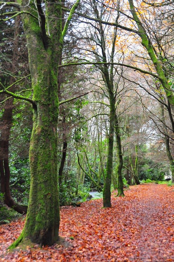 Árboles forestales a lo largo de un otoño f imagen de archivo libre de regalías