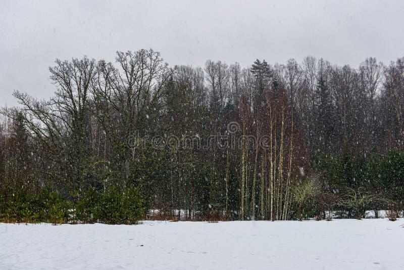 ?rboles forestales nevosos de la helada en d?a soleado en invierno fotografía de archivo