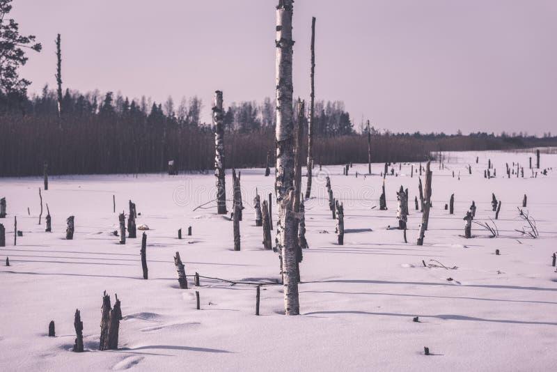 árboles forestales secos y muertos desnudos congelados en el paisaje nevoso - vint imagen de archivo libre de regalías