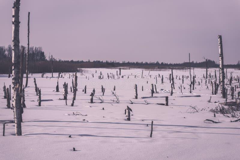 árboles forestales secos y muertos desnudos congelados en el paisaje nevoso - vint foto de archivo