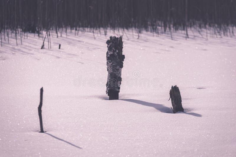 árboles forestales secos y muertos desnudos congelados en el paisaje nevoso - vint fotografía de archivo