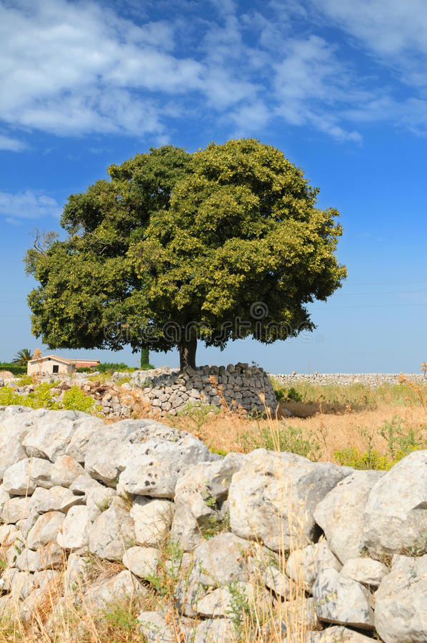 Árboles frondosos y pared de piedra seca fotos de archivo