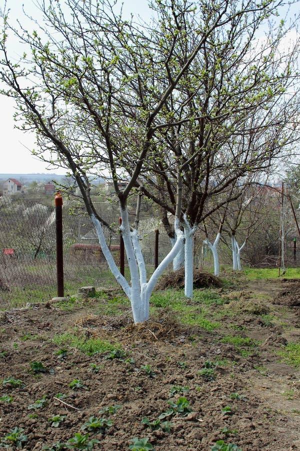 Árboles frutales en el jardín foto de archivo libre de regalías