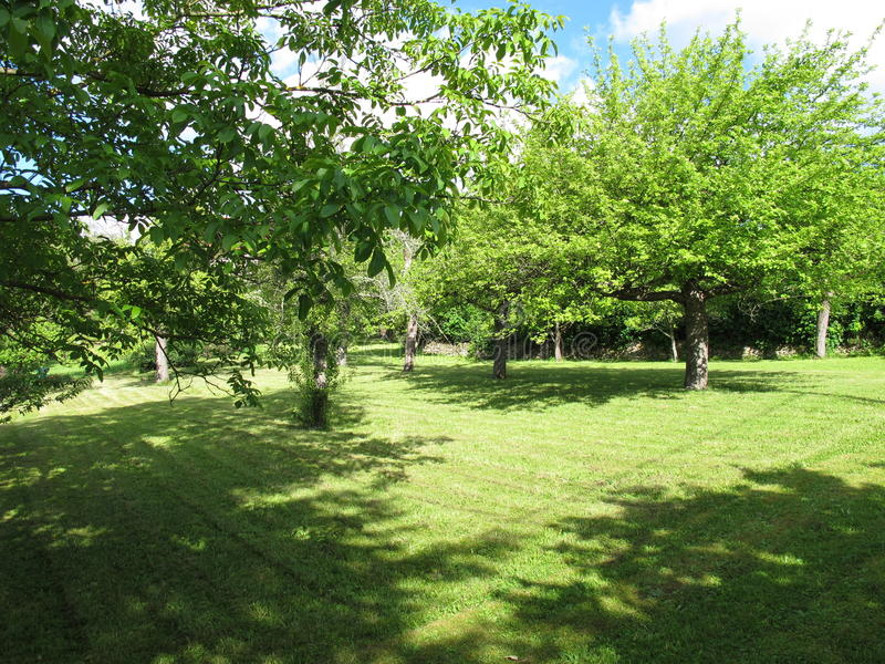 Árboles frutales en un prado imagenes de archivo