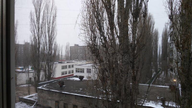 Árboles fuera de la ventana fotos de archivo libres de regalías