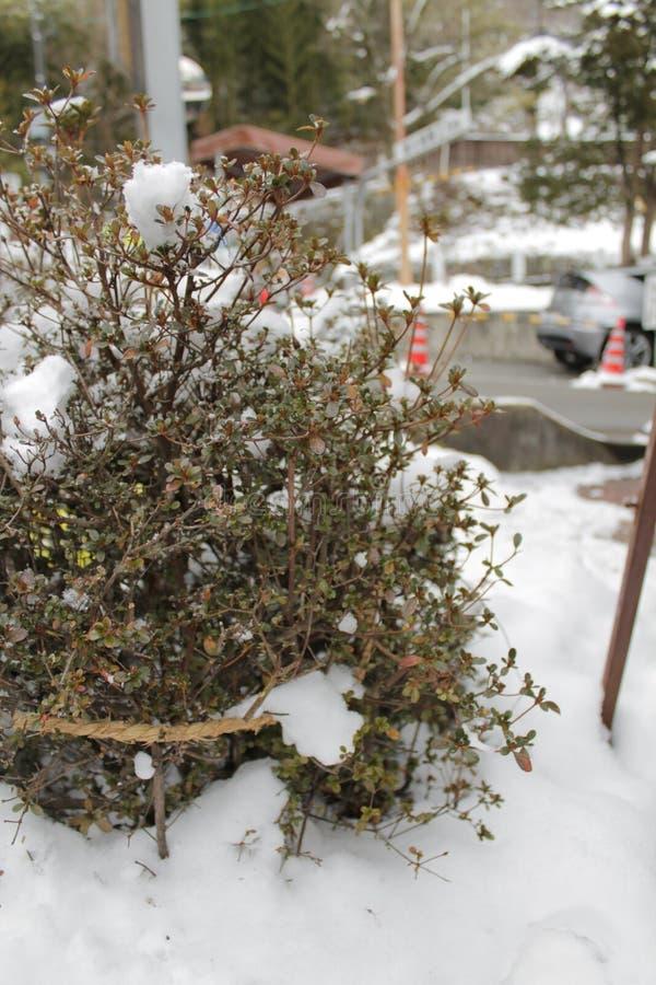 ?rboles fuertes borrosos de la foto en el invierno de la nieve imágenes de archivo libres de regalías