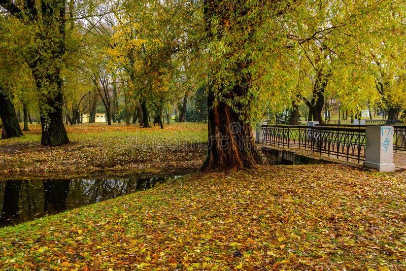 Árboles gruesos viejos en los bancos de un río estrecho en el parque público de la ciudad del otoño fotografía de archivo