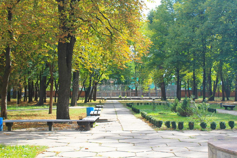 Árboles hermosos del otoño en parque de la ciudad imágenes de archivo libres de regalías
