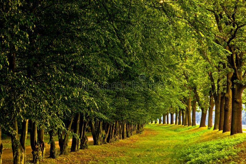 Árboles impresionantes imagen de archivo