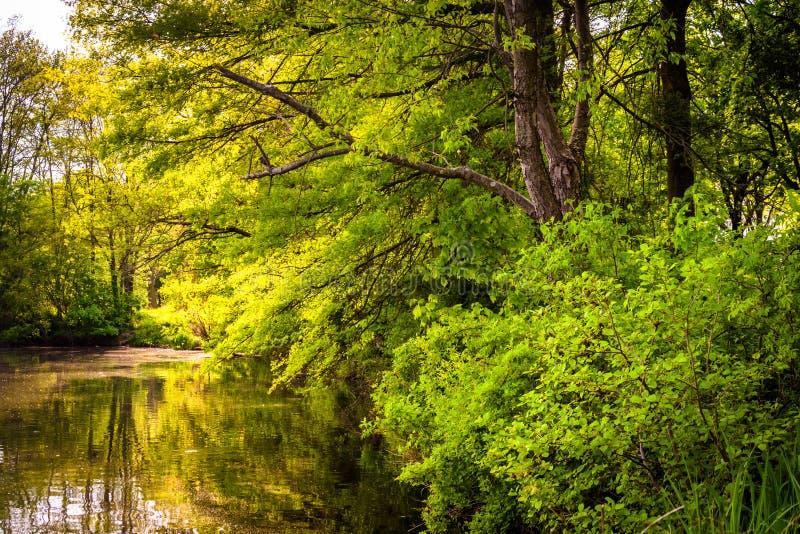 Árboles a lo largo de la orilla del lago en Columbia, Maryland Wilde imágenes de archivo libres de regalías