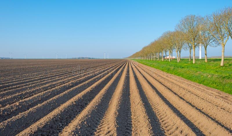 Árboles a lo largo de un campo arado imagenes de archivo
