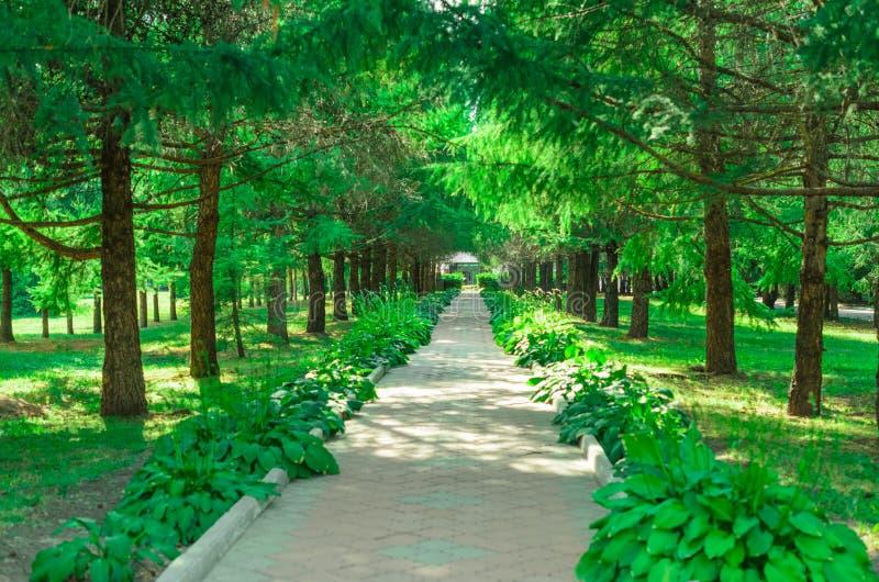 Árboles a lo largo del callejón sombrío en el parque del verano fotos de archivo