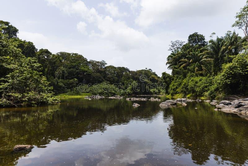 Árboles a lo largo y rocas en el río foto de archivo