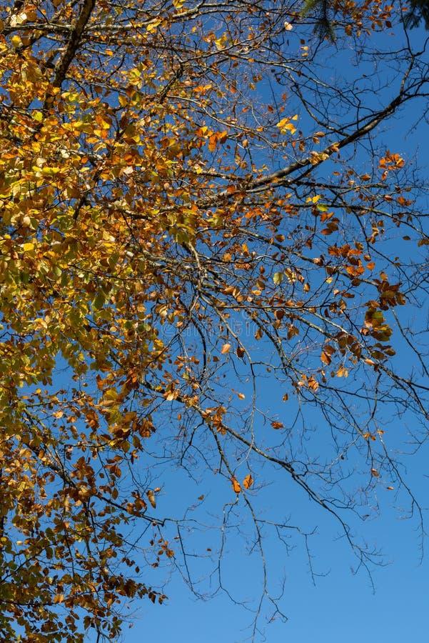 Árboles más forrest de Autum los solos en frente foto de archivo libre de regalías
