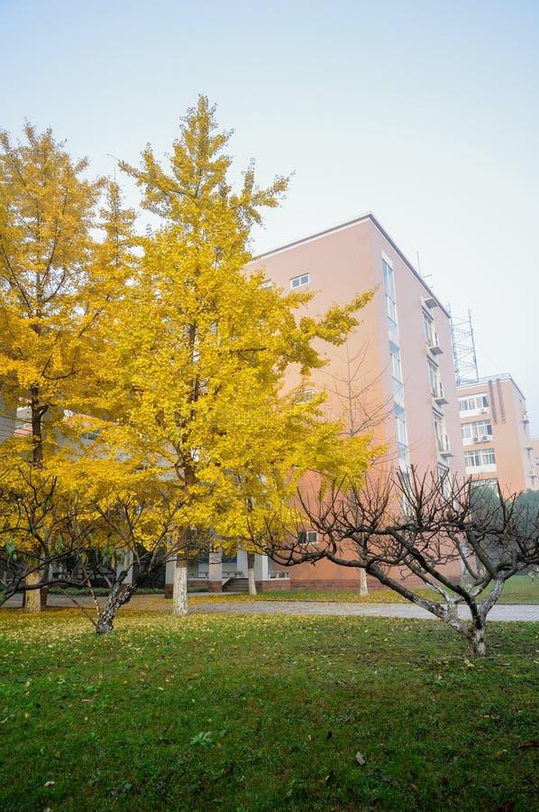 Árboles marchitados en invierno fotos de archivo