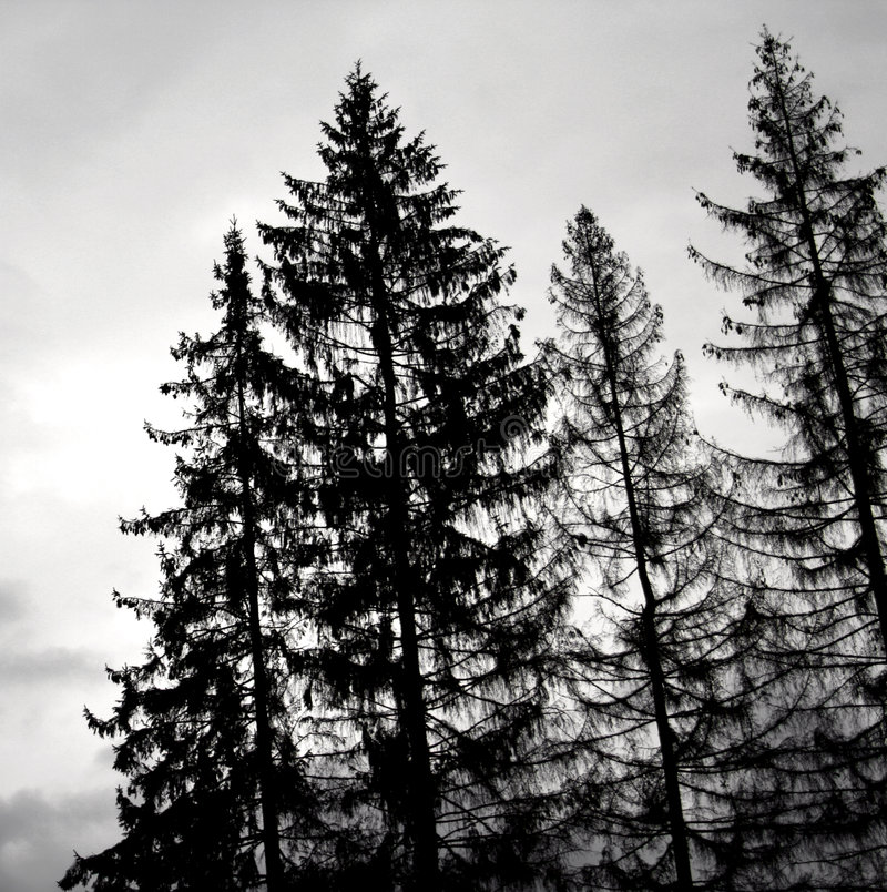 Árboles negros fotografía de archivo libre de regalías