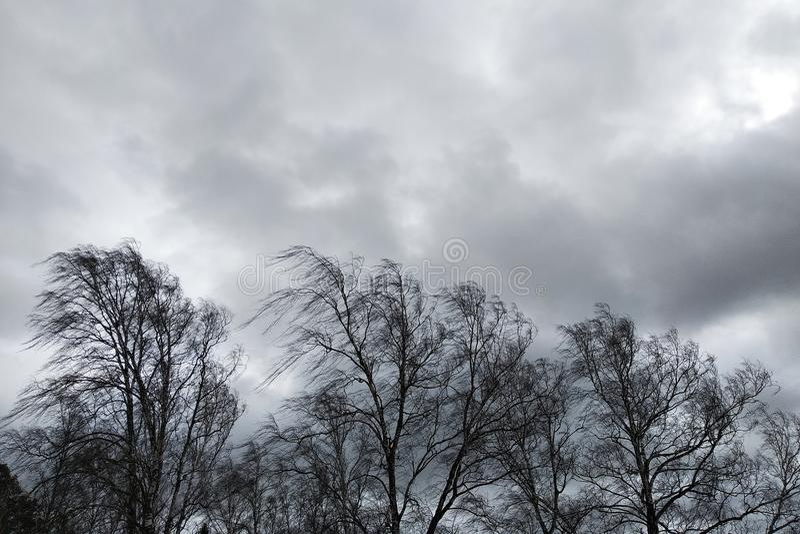Árboles negros con ramas desnudas sin hojas inclinadas bajo fuerte viento en mal tiempo fotos de archivo