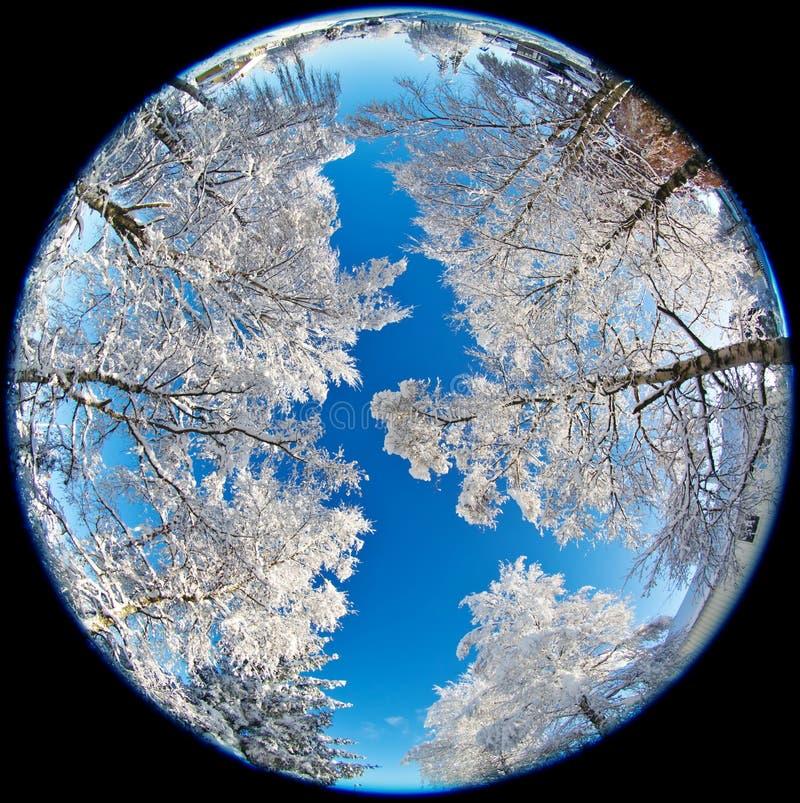 Árboles Nevado imágenes de archivo libres de regalías