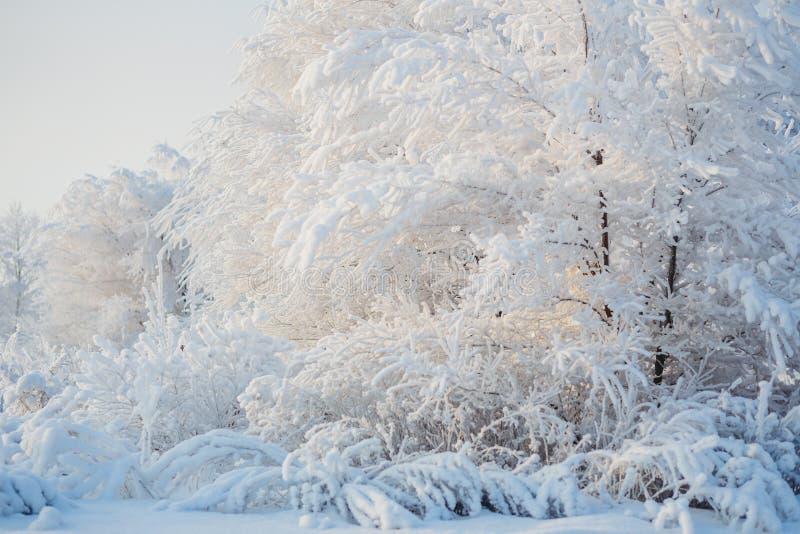 Árboles Nevado, bosque del invierno, nieve, paisaje del invierno foto de archivo