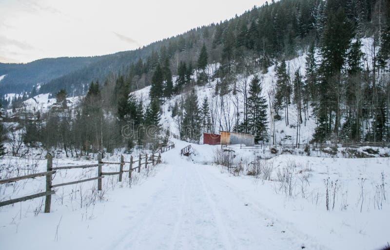Árboles Nevado del camino nevoso y del bosque del invierno wallpaper imágenes de archivo libres de regalías