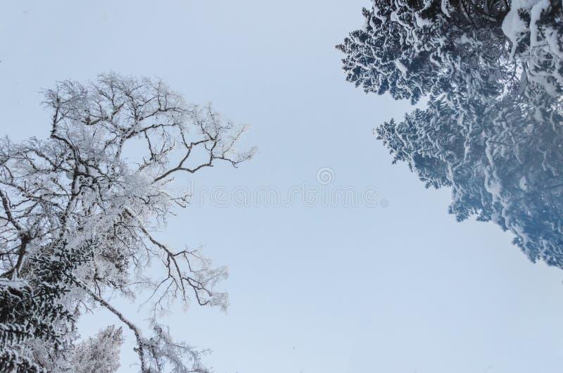 Árboles Nevado en bosque del invierno con una luz hermosa imagenes de archivo