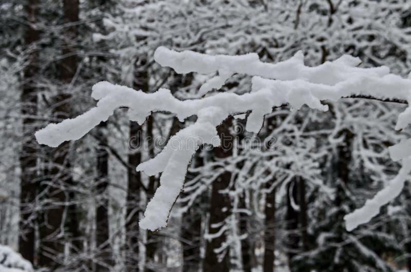 Árboles Nevado en la última hora de la tarde del invierno, Bankia Sofía imagenes de archivo